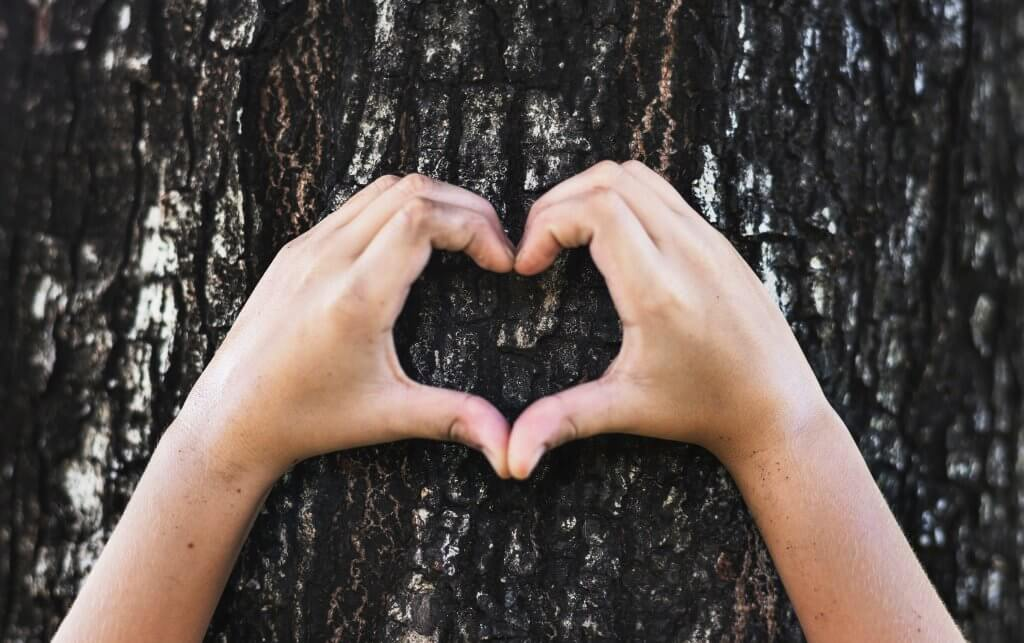 corporate social responsibility - tree and heart